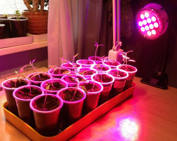 Лампы для растений светодиодная своими руками